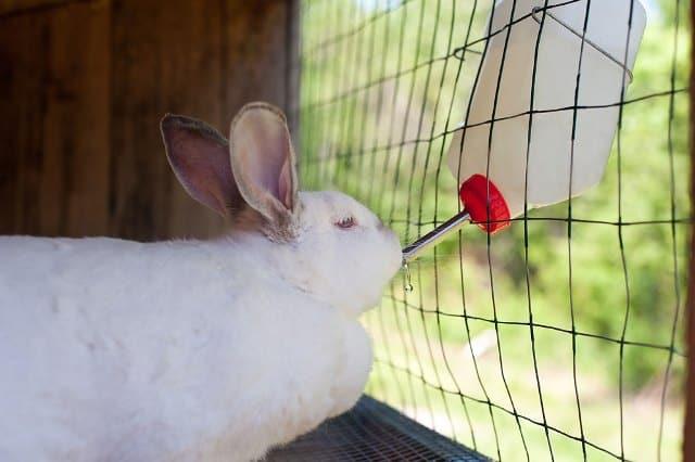 Que signifie rêver de lapin en cage ?