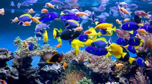 Un rêve d'aquarium et sa signification:
