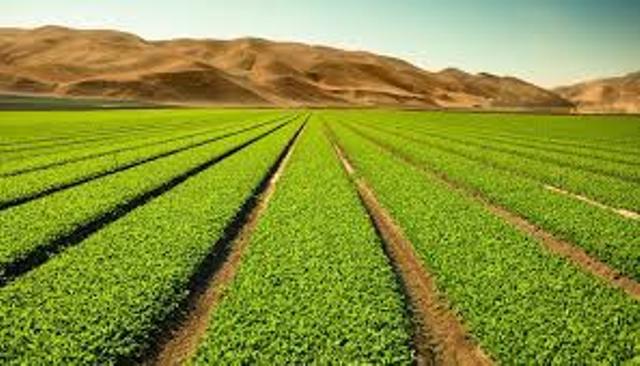 Que signifie rêver d'agriculture ?