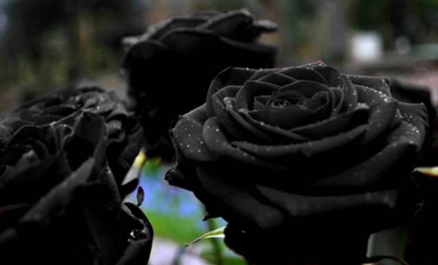 Que signifie rêver de fleurs noires ?