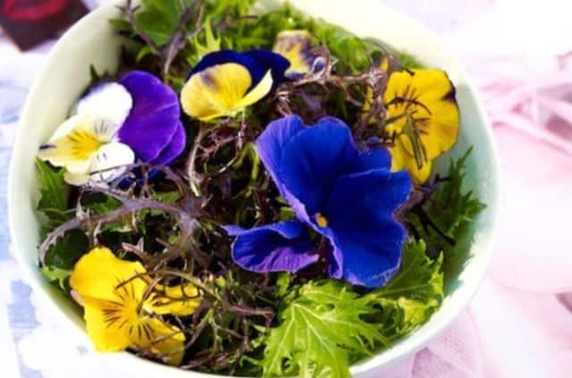 Que signifie rêver de manger des fleurs ?