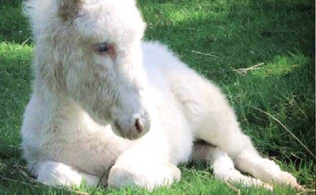 Que signifie un rêve d'âne blanc ?