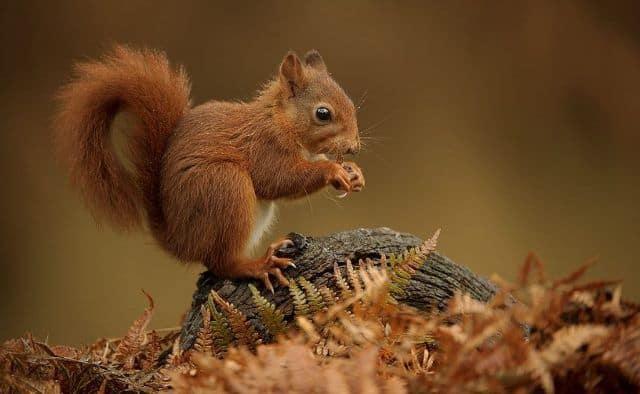Que signifie rêver d'écureuil ?