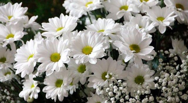 Que signifie un rêve de fleurs blanches ?