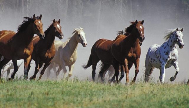 Que signifie rêver de troupeau ?