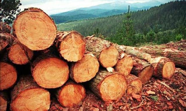 Que signifie rêver de couper des arbres ?