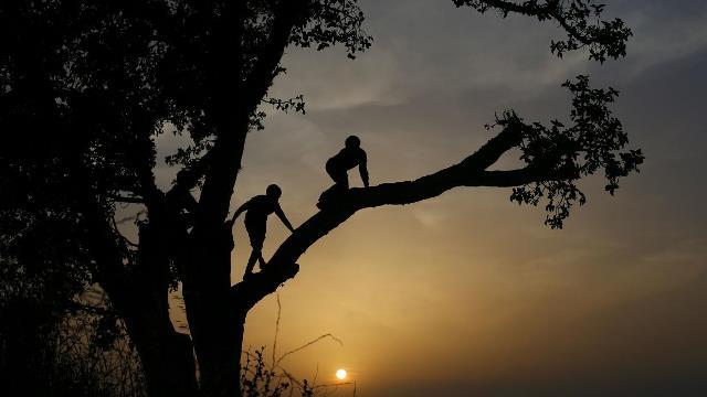Que signifie rêver de grimper aux arbres ?