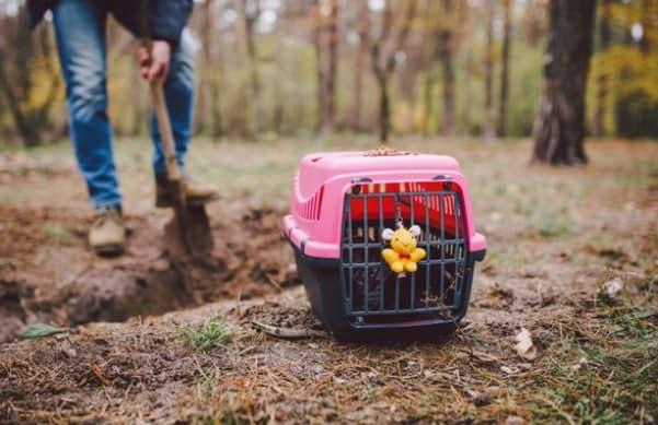 Que signifie rêver d'enterrer un chat ?
