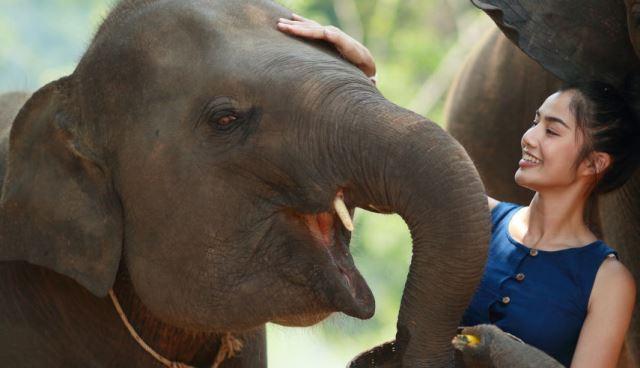 Que signifie rêver de caresser un éléphant ?