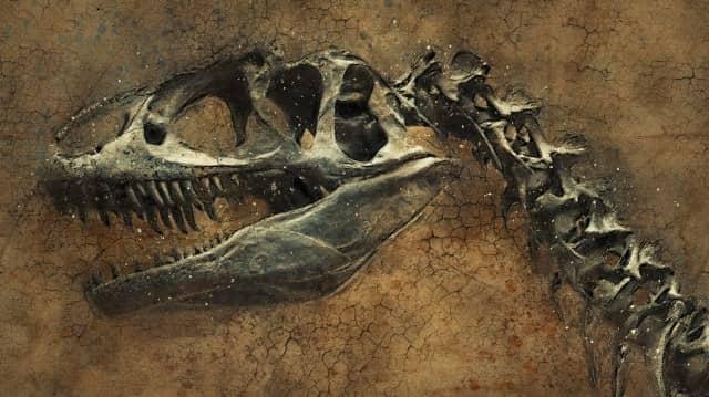 Que signifie rêver de fossile ?
