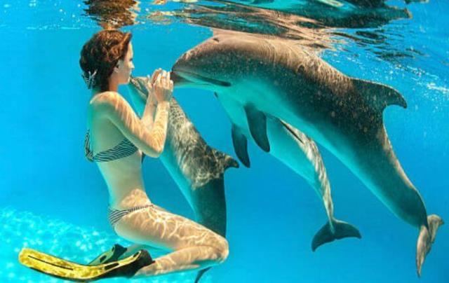 Que signifie rêver de nager avec les dauphins ?